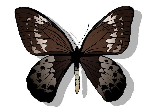 Голиаф birdwing бабочка ornithoptera goliath