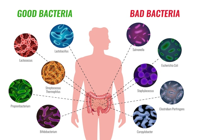 Good and bad bacteria poster with healthcare and treatment symbols flat   illustration