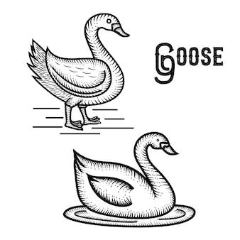 Goose hand drawn