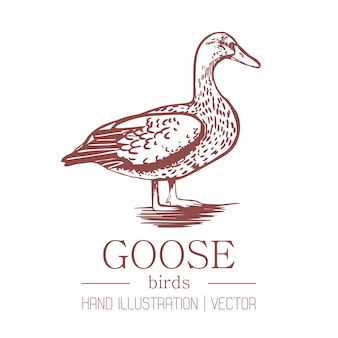 Goose. vintage style. hand drawing.