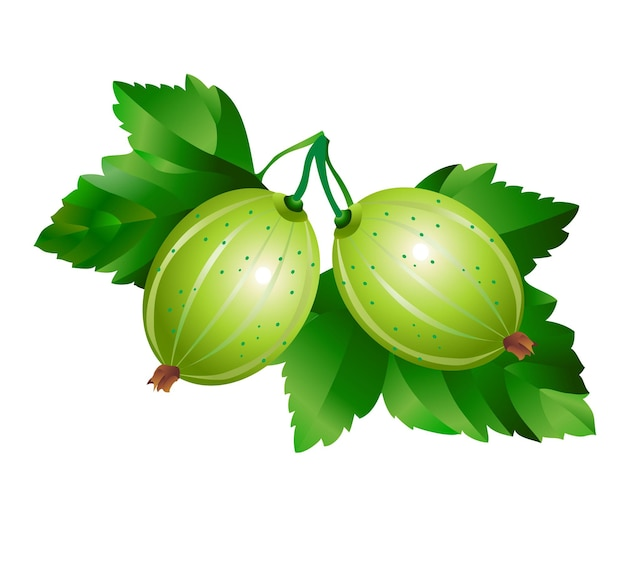 Gooseberry with leaves isolated on white