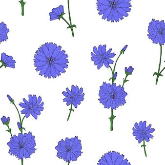Gorgeous botanical seamless pattern with blooming purple chicory flower heads and buds hand drawn in vintage style.