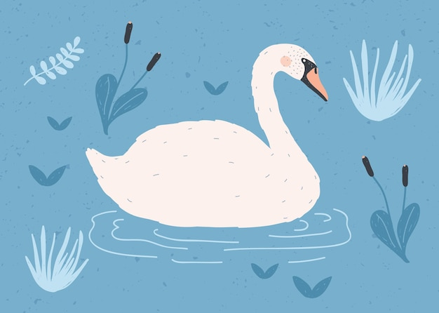 Gorgeous lonely white swan swimming in water of pond or lake among plants.