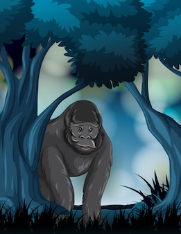 A gorilla in forest