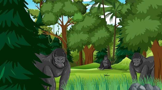 多くの木がある森や熱帯雨林のシーンのゴリラグループ