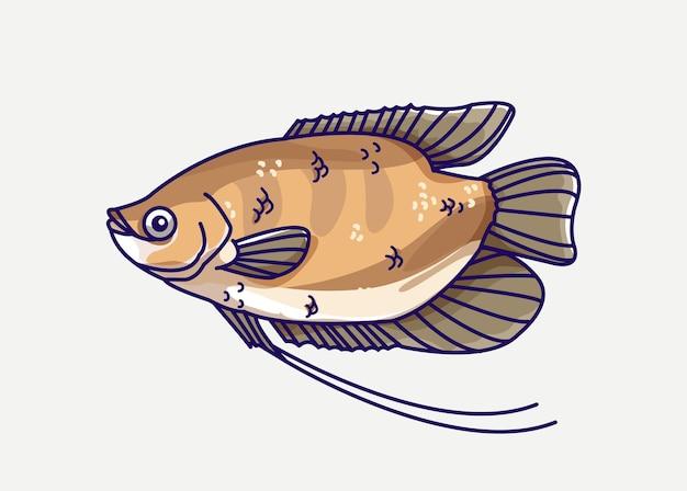 Иллюстрация пресноводных рыб гурами.