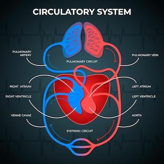 Градиентная инфографика системы кровообращения