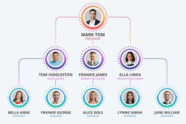 Градиентная организационная диаграмма инфографики с фото