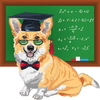 Graduated dog pembroke welsh corgi