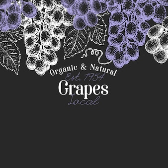 Grape berry design. hand drawn vector fruit illustration on chalk board. engraved style retro botanical.