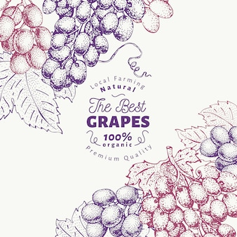 Grape berry design template. hand drawn vector fruit illustration. engraved style retro botanical background.