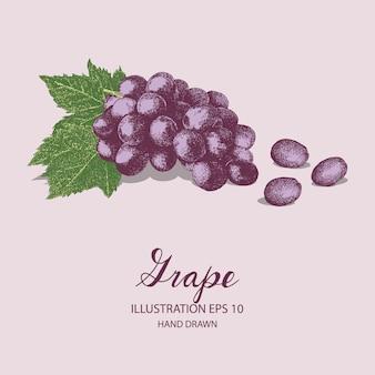 Виноградные фрукты рисованной иллюстрации чернилами и эскизом пера