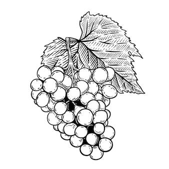 白い背景の彫刻スタイルのブドウのイラスト。ロゴ、ラベル、エンブレム、看板、ポスター、ラベルの要素。図