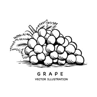 Иллюстрация винограда