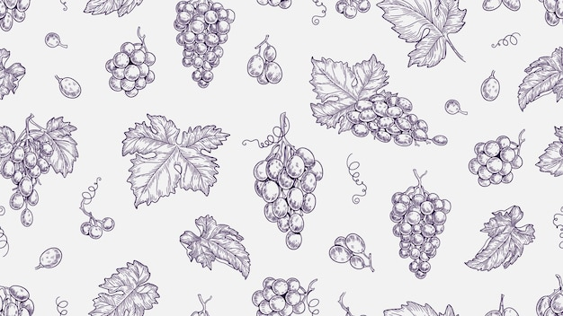 Grape pattern. vine seamless texture, plants and leaves. sketch vineyard and wine raw elements vector background. illustration vine and grape, seamless pattern grapevine