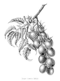 グレープトマト枝ヴィンテージ彫刻イラスト黒と白のクリップアート白で