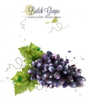 Виноградная акварель на белом фоне