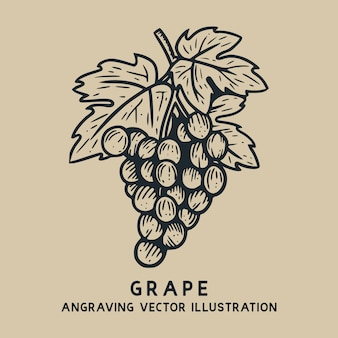 Виноград с листом старинные рисованной гравюры иллюстрации