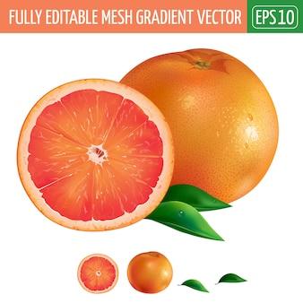 Grapefruit illustration on white