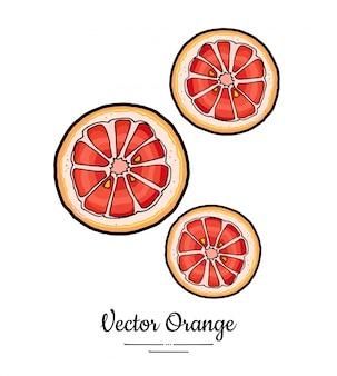 Установленные апельсины грейпфрута установили изолированный вектор. целый оранжевый красный розовый нарезать нарезанные круглые ломтики.