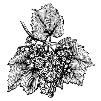 ブドウブドウの手描きイラスト
