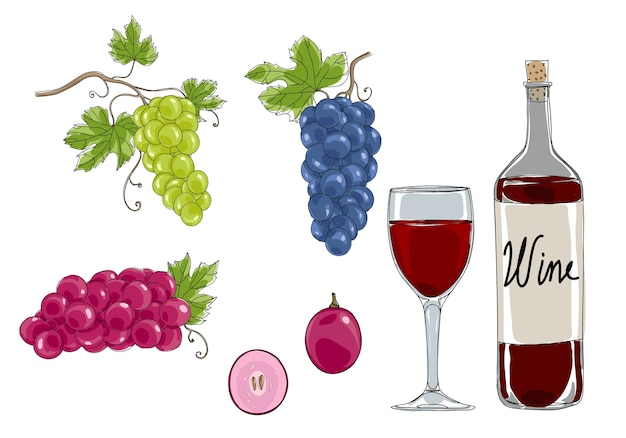 Grapes hand drawn vector set art illustration