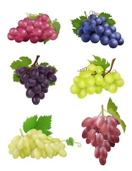 現実的なブドウ。葉を持つ白と黒のブドウ自然植物ワインシンボルベクトルコレクション。ブドウの葉、果物の新鮮な収穫のイラスト