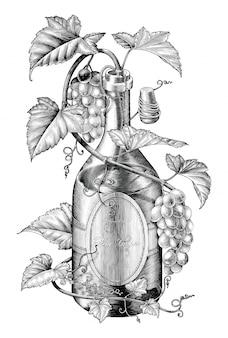 Grapes twing in wine bottle illustration black and white clip art, the concept of wine grapes banding