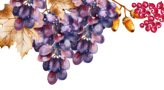 Grapes watercolor. autumn fall harvest background