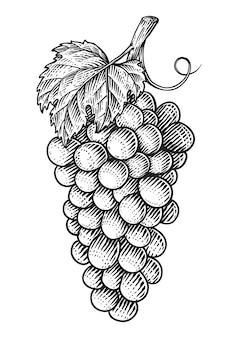 Виноград с листьями