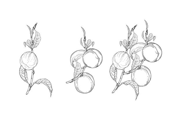 복숭아 과일 일러스트와 함께 그래픽 지점