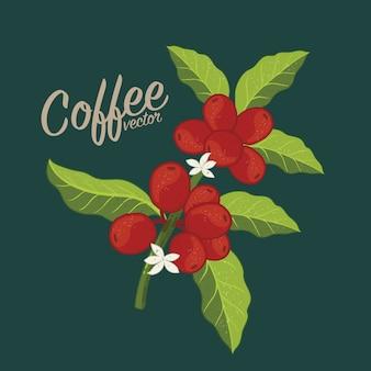 그래픽 커피 나무 농장, 가지, 잎, 콩.