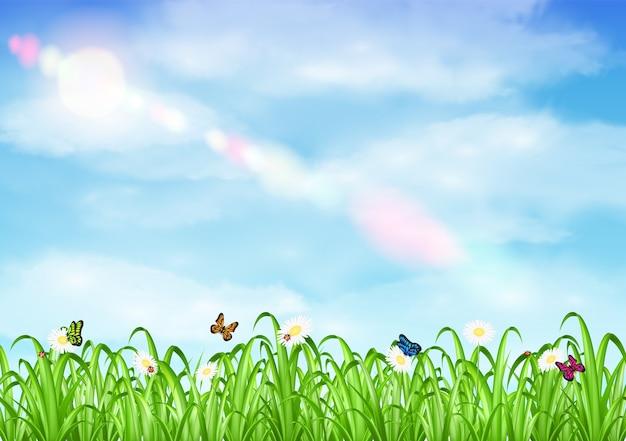 草、花、空の背景