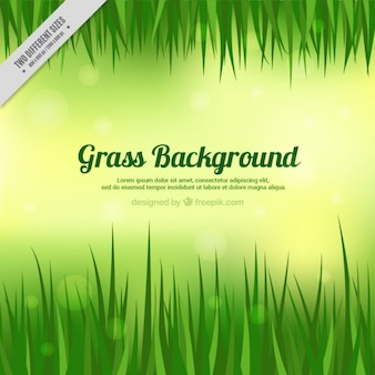 Grass background with template