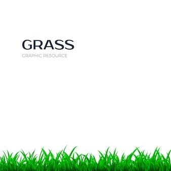 草の境界線。緑の芝生と水平型バナー。白い背景の上の図