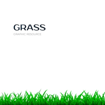 Grass border. horizontal banner with green grass.  illustration  on white background