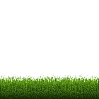 Grass border isolated,  illustration