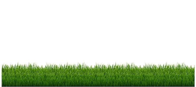 Рамка из травы с белым фоном