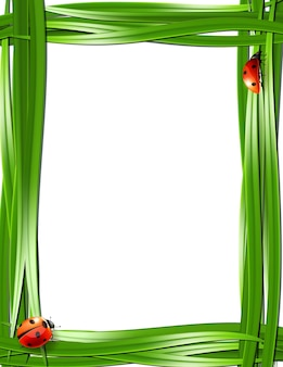 Grass frame with ladybugs. vector illustration