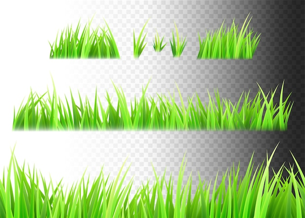 Grass isolated set. tufts of grass.
