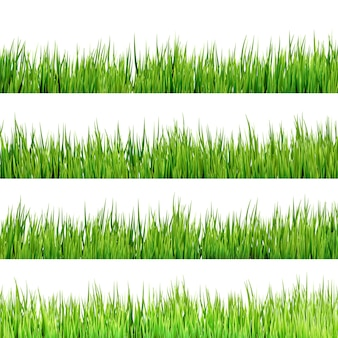Grass isolated on white.
