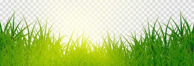Grass, lawn. grasses png, lawn png. young green grass with sun glare.