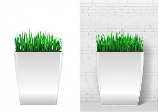 Grass plant in modern white pot