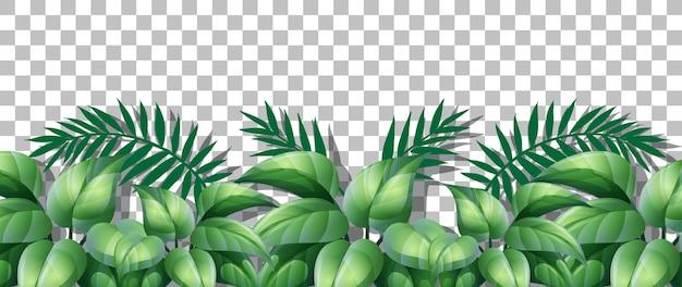Erba e piante su sfondo trasparente per l'arredamento