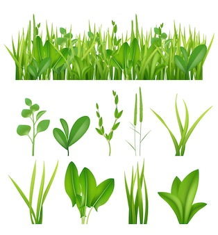 Grass realistic. ecology set green herbs leaves plants lifes meadows vector elements collection. grass green meadow, lawn summer lush illustration