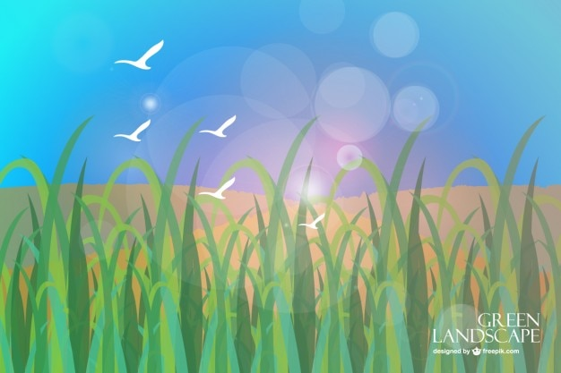 Grass scenery with white seagulls