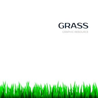 草のテクスチャです。バナーの現実的な水平ハーブ植物学フレーム。図