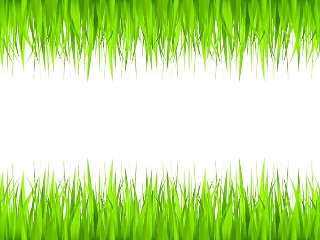 Grass over white background
