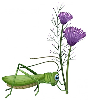 Кузнечик и фиолетовые цветы на белом фоне