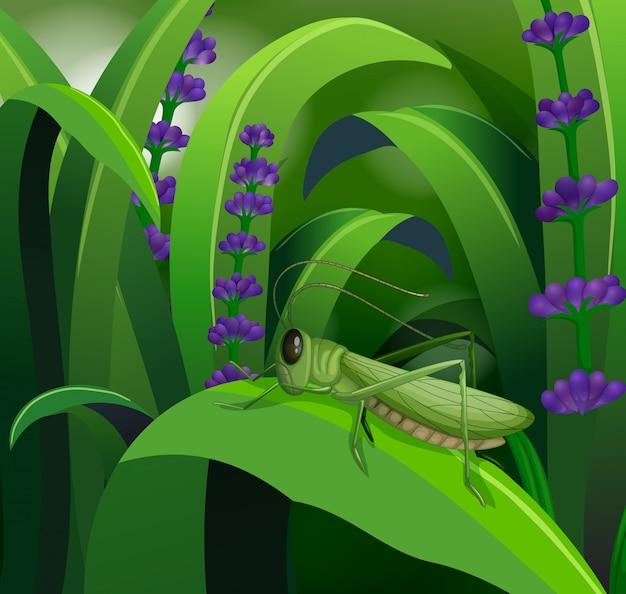 잎사귀에 메뚜기